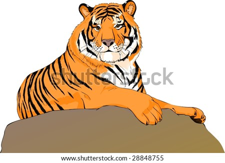 The red bengal tiger lies on a stone