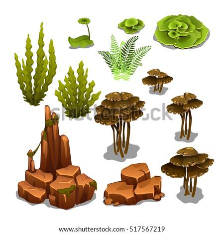 The set of algae and underwater rocks isolated on white background. Vector illustration.