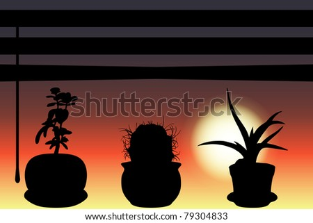 The shadows of three cactuses on window