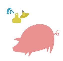 The silhouette of a pink pig, and the image of electronic tags in yellow. Suitable for use in advertising materials on agriculture, in the form of icons for the site and infographics