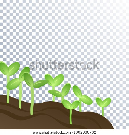 the soil is fertile and plants