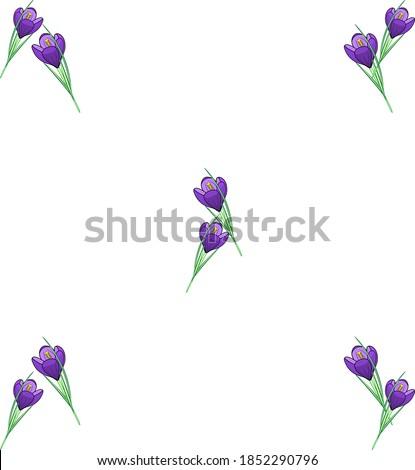 the spring crocus flower
