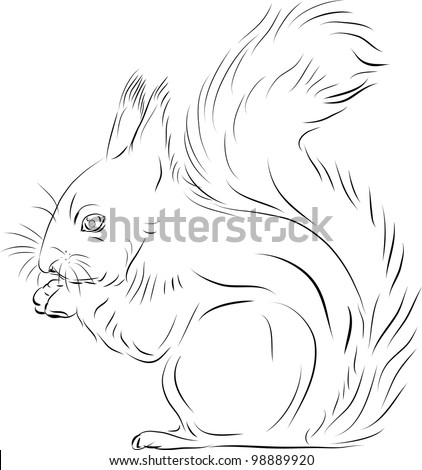 Outline of a Squirrel http://www.shutterstock.com/pic-98889920/stock-vector-the-squirrel-gnawing-nuts.html