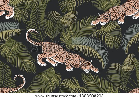 the stalking wild jaguar and