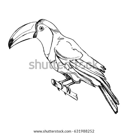 Shutterstock The toucan Toco sitting on a branch isolated on white. Also known as the common toucan or toucan,. It is found in a large part of central and eastern South America.