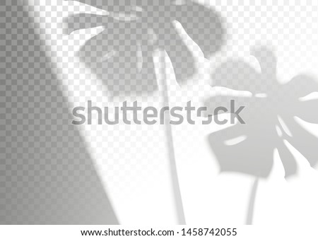The transparent shadow overlay effect. Leaves of monstera for branding. A4 format Mockups. Scenes of natural lighting. Photo-realistic vector. The monstera leaves and window frame overlays shadows