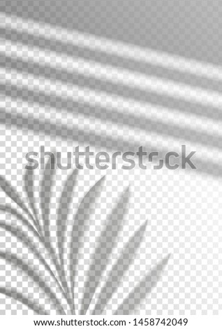 The transparent shadow overlay effect. Tropic leaf and window blind. Mockup with overlay a palm leaf shadow. Natural lighting overlays shadow on top. Scene of Shadow from the window. Realistic vector