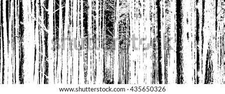 the trunks of the trees forest