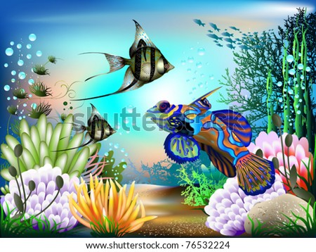 the underwater world of fish