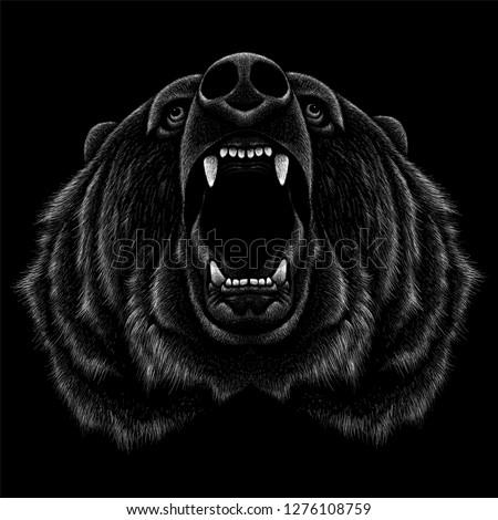the vector logo bear for t