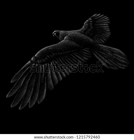 The Vector logo of fly eagle for tattoo or T-shirt design or outwear.  Hunting style eagle background.