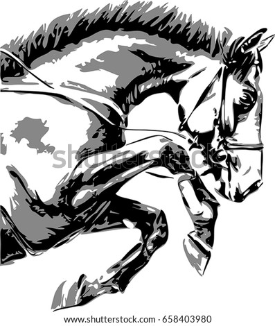 the vector portrait of a horse