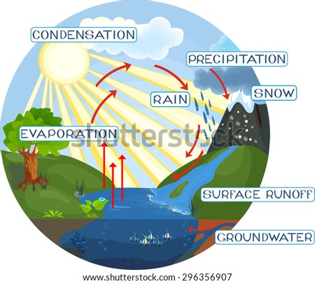 Diagram Of The Water Cycle | Free Water Cycle Diagram Vector Download Free Vector Art Stock