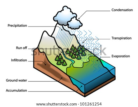Transpiration Water Cycle The Water Cycle Showing