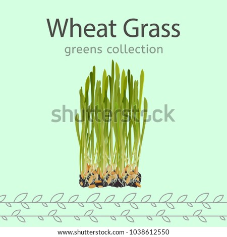 the wheat grass image isolated