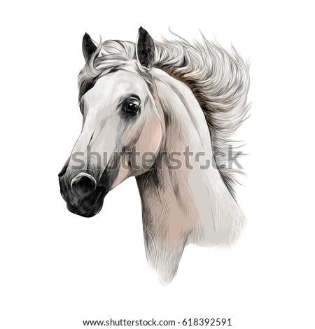 the white horse head profile