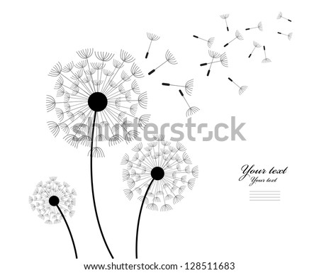 The wind inflates a dandelion. Image on the white background.