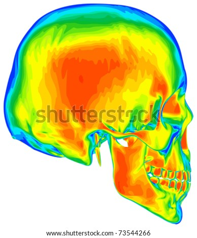 Thermal image of the human skull, isolated on white background