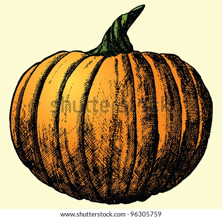 This is a hand drawn sketch of a pumpkin (sketch was live traced).