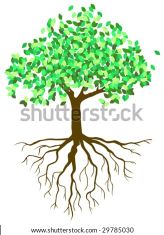 This vector picture represents a complete plant, with root and foliage