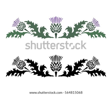 Thistle. Onopordum acanthium. Scottish Thistle isolated on white, vector illustration