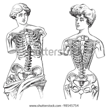 Thorax of Venus de Milo (left) and thorax of mannequin (right) / vintage illustrations from Die Frau als Hausarztin 1911