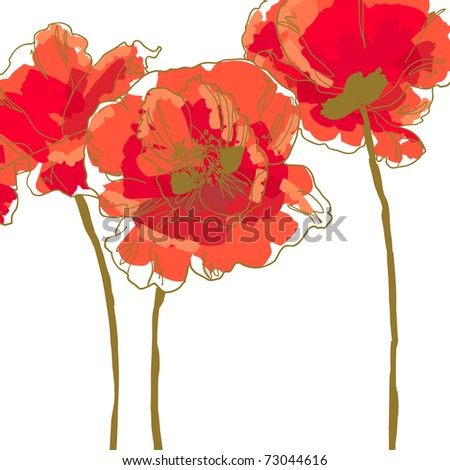 Three beautiful red poppy isolated on white background