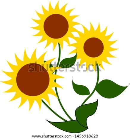three big sunflowers