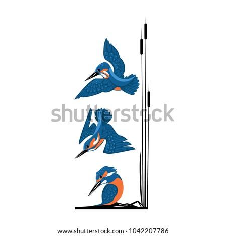 three blue kingfishers