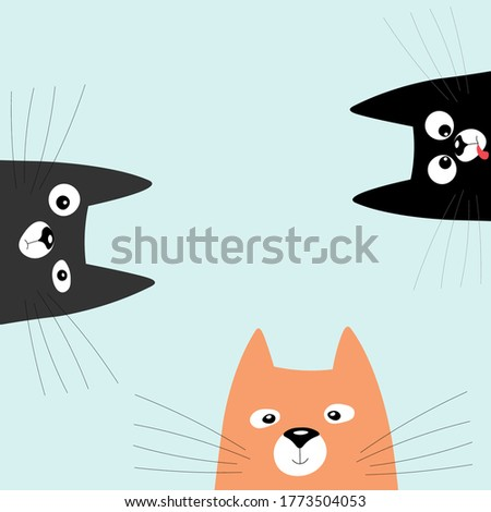 three cats looking curiously
