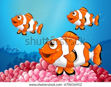three clownfish under the ocean