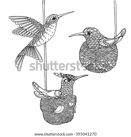 Hummingbird Coloring Pages – coloring.rocks! |Hummingbird Nest Coloring Page