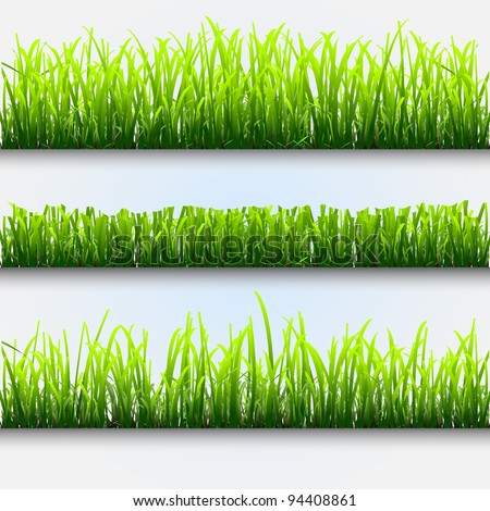 Three different types of green grass for design.Vector eps10