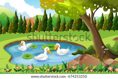 three ducks swimming in the