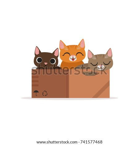 three funny cats of diffferent