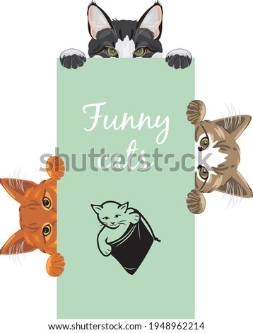 three funny spying cats design