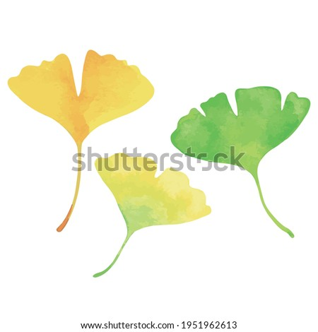 three ginkgo leaves green
