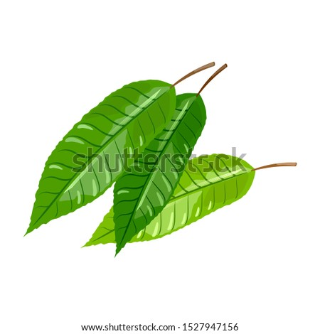 three green leaves of cherry