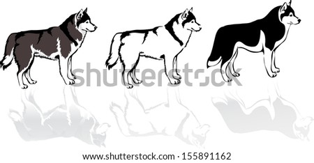 three husky dogs  vector image