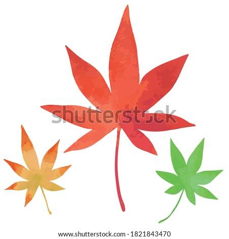three japanese maple leaves