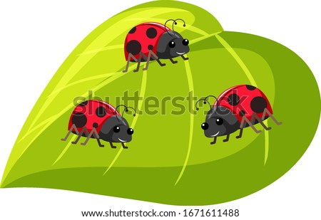 three ladybugs on green leaf on