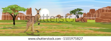 three large red kangaroos on