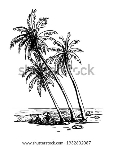 three palm trees growing on a