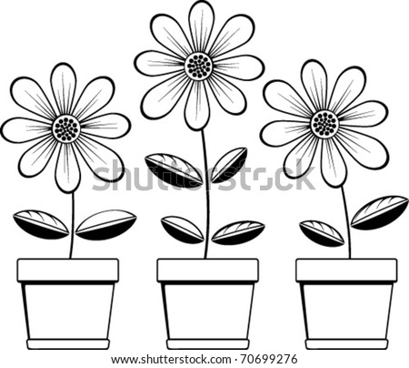three pots with three daisies