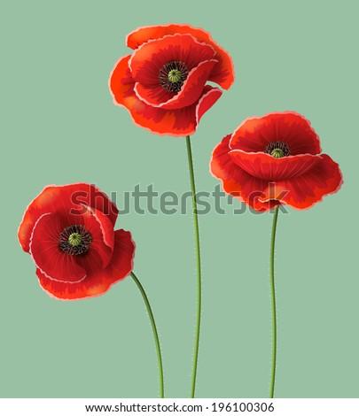 three red poppy flowers