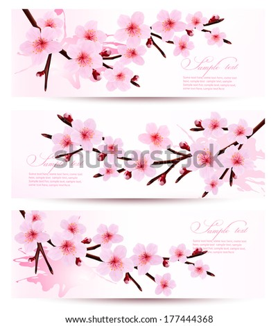 Three spring banners with blossoming sakura branches Vector illustration
