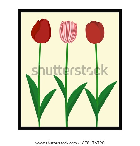 three tulips in the picture