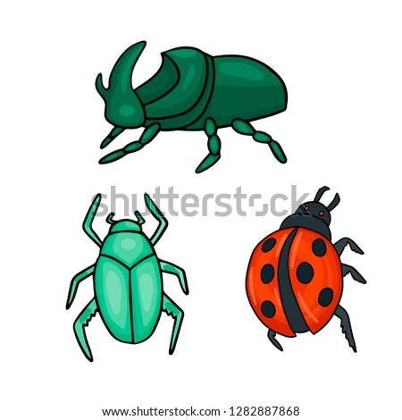three types of beetles ladybug