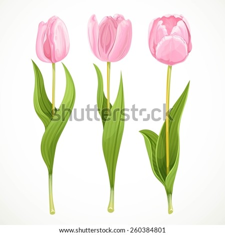 three vector pink flowers