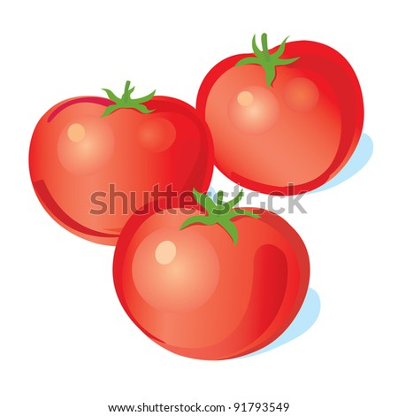 three vector tomatoes - stock vector